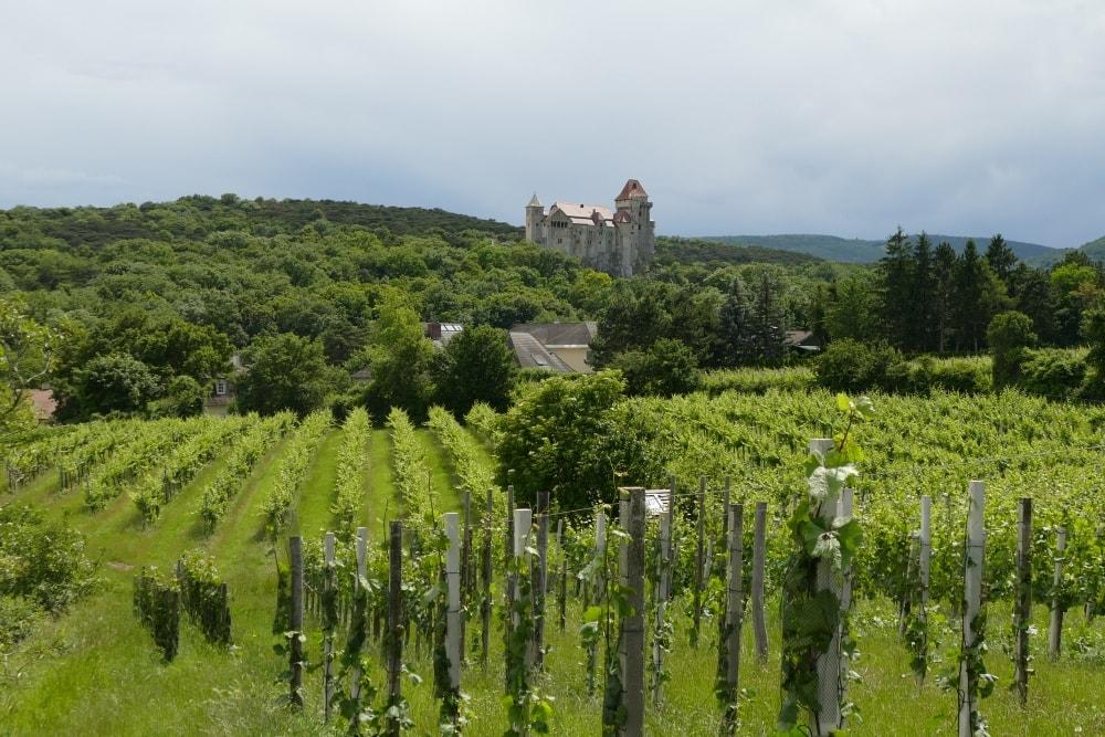 Weinwanderung Brunn