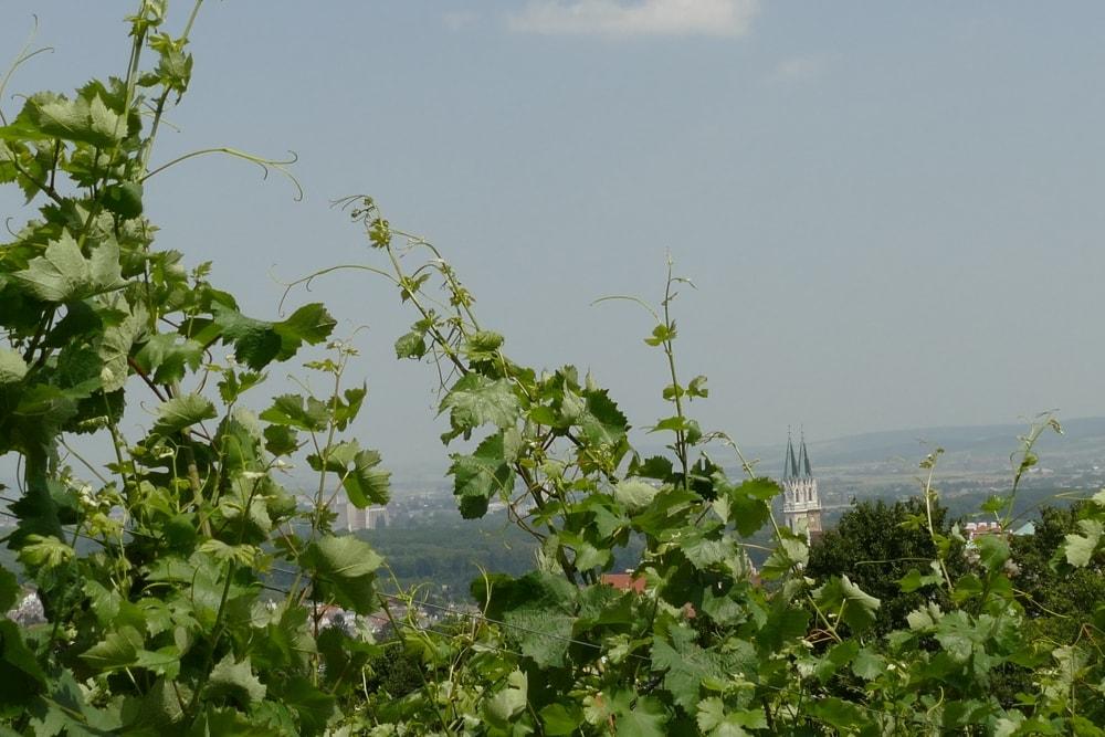 Weinwanderung Klosterneuburg