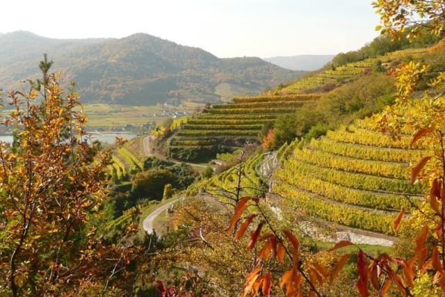 Weinwanderung Loibenberg Dürnstein
