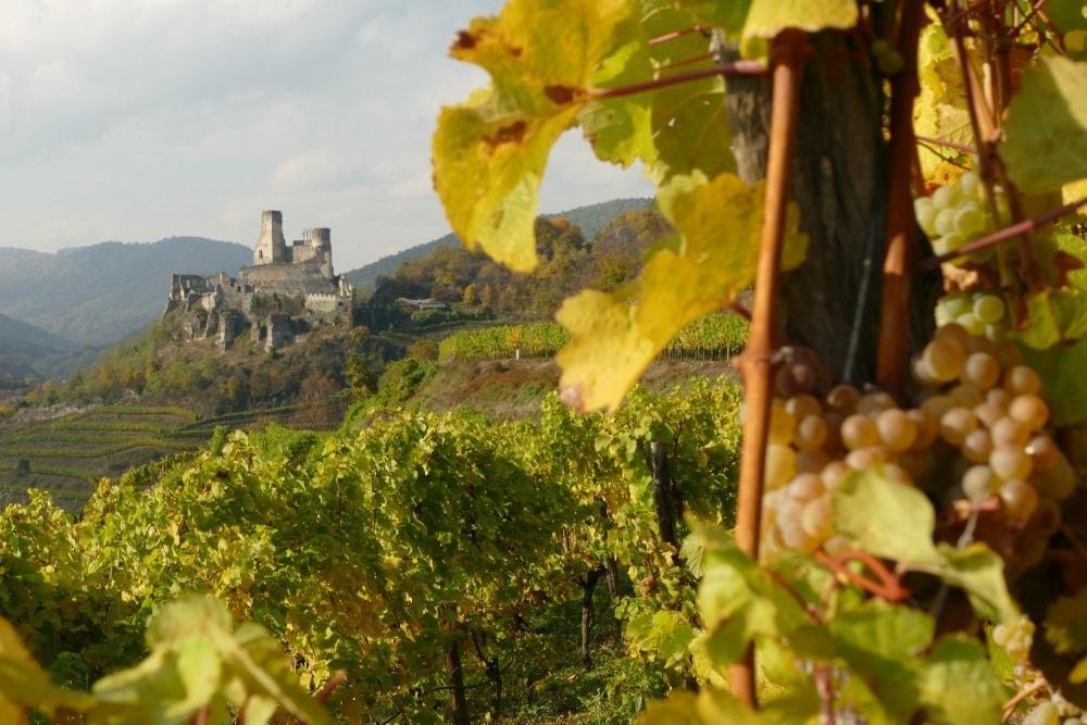 Weinwanderung Senfteberg