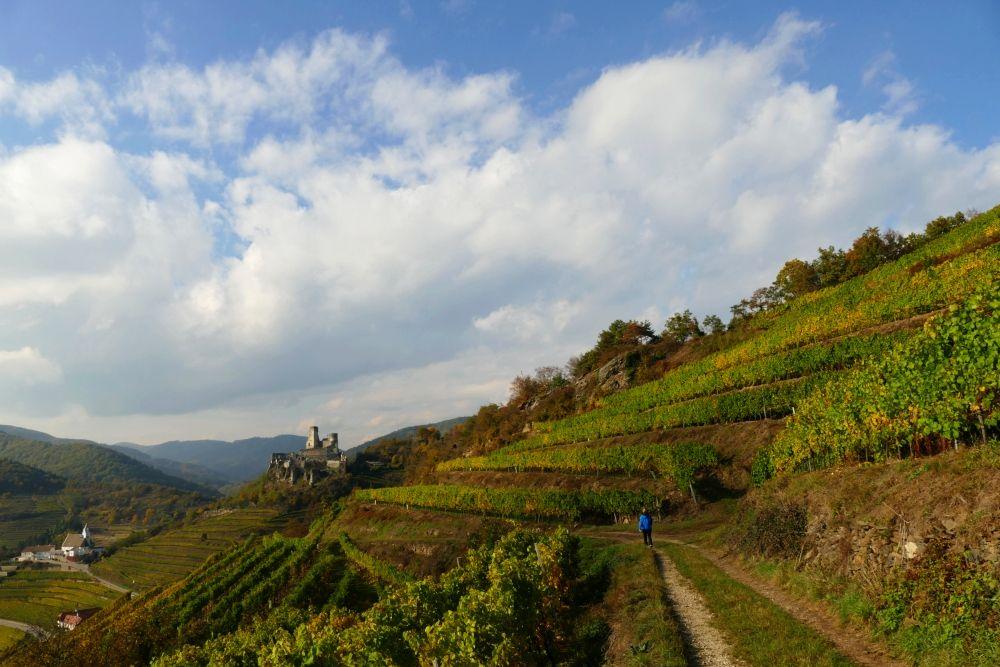 Die schönsten Weinwanderungen in Österreich