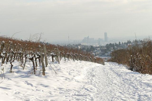 Wein im Winter
